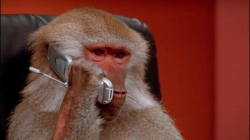 Маймун тушда